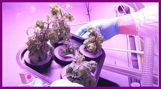کشاورزی در فضا برای سفرهای طولانی فضایی - علمی فرهنگی